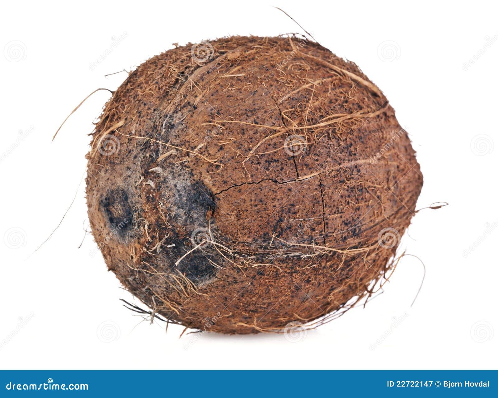 Noce di cocco immagine stock immagine di pianta fine for Pianta di cocco