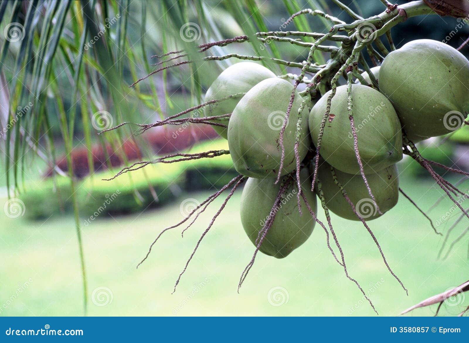 Noce di cocco di Unplucked