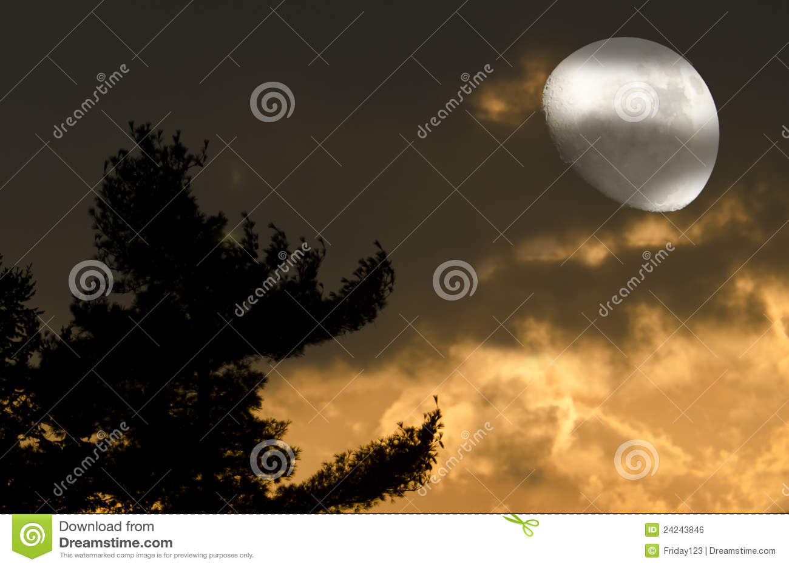 Noche del místico de la luna