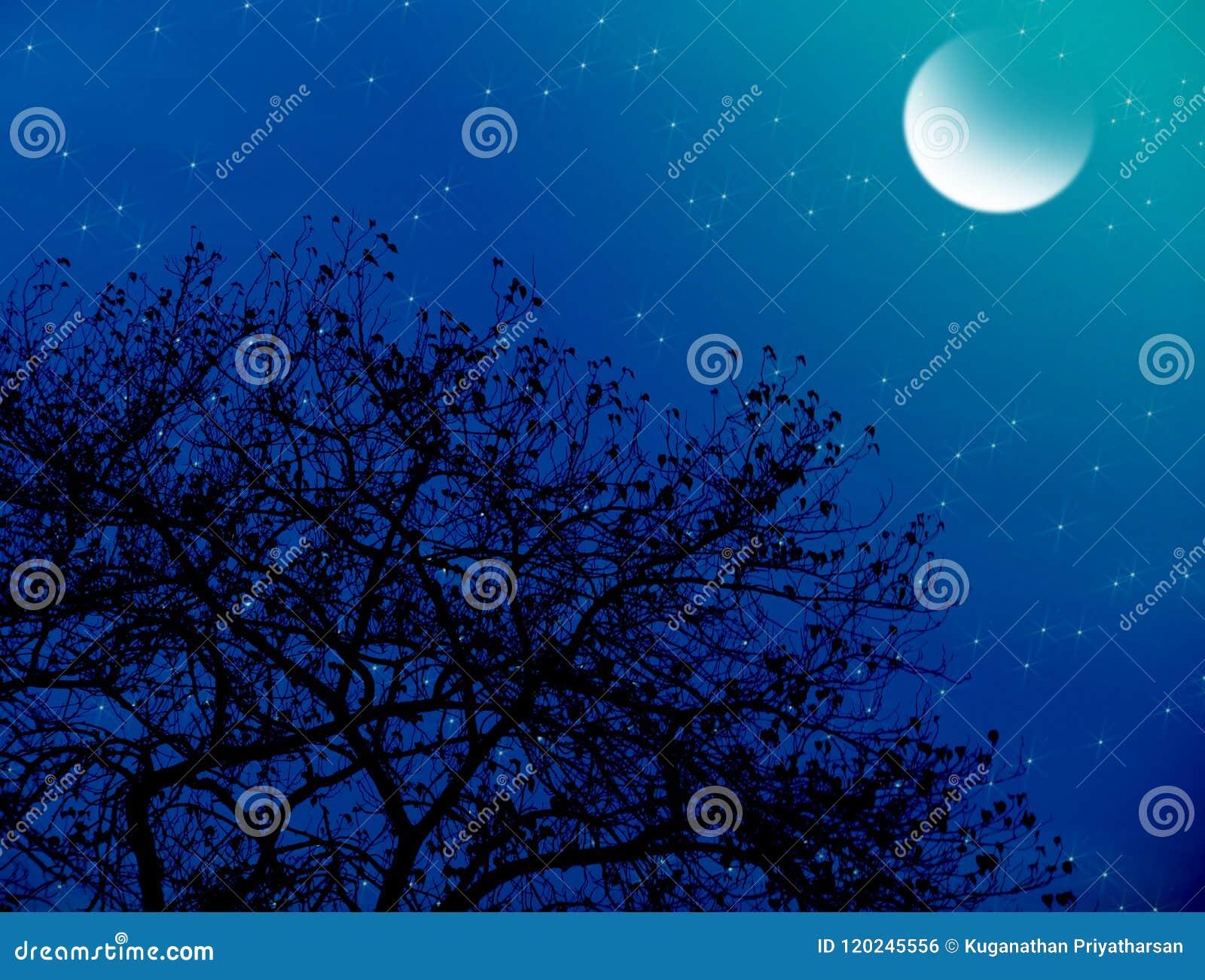 Noche estrellada iluminada por la luna
