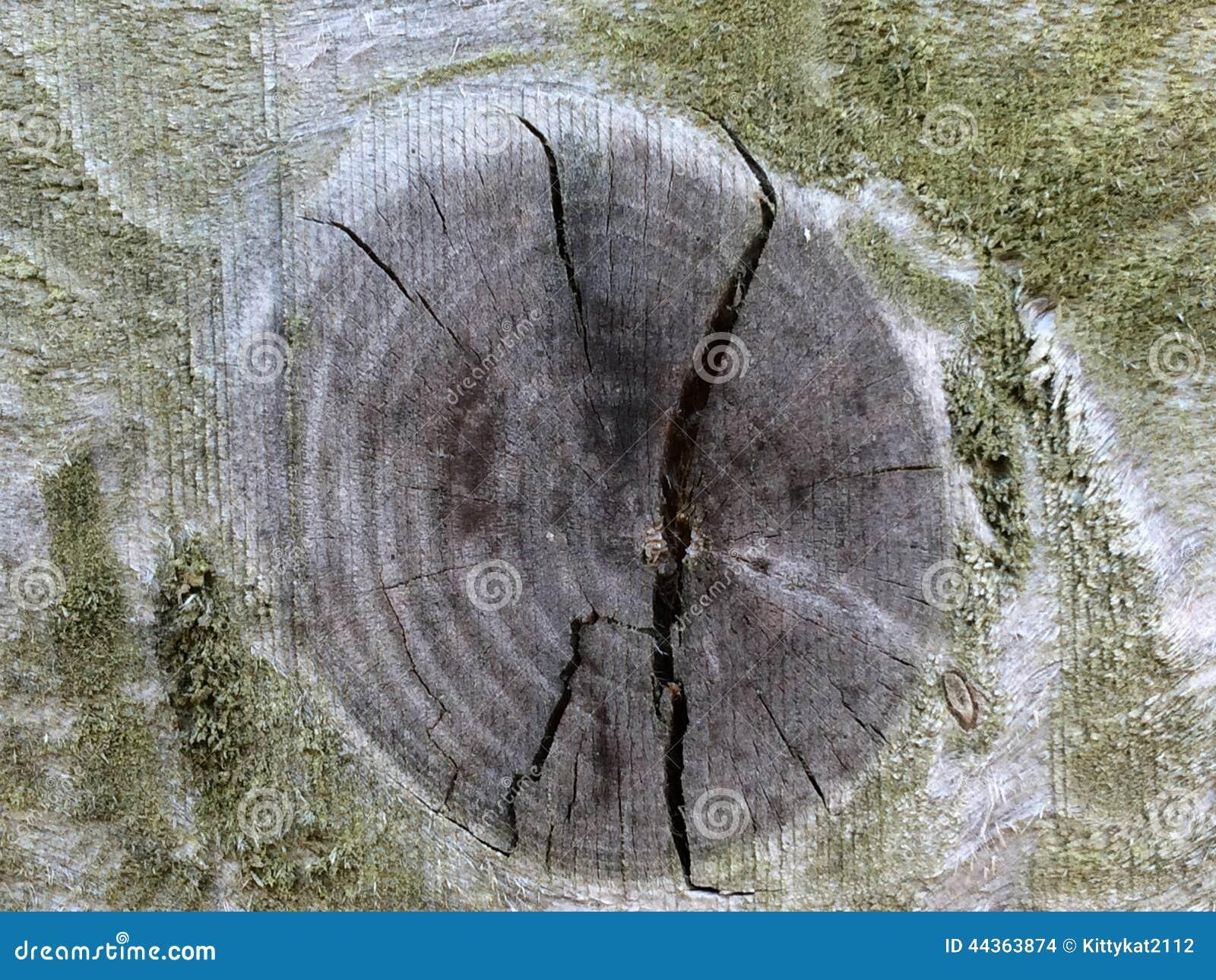Nodo di legno