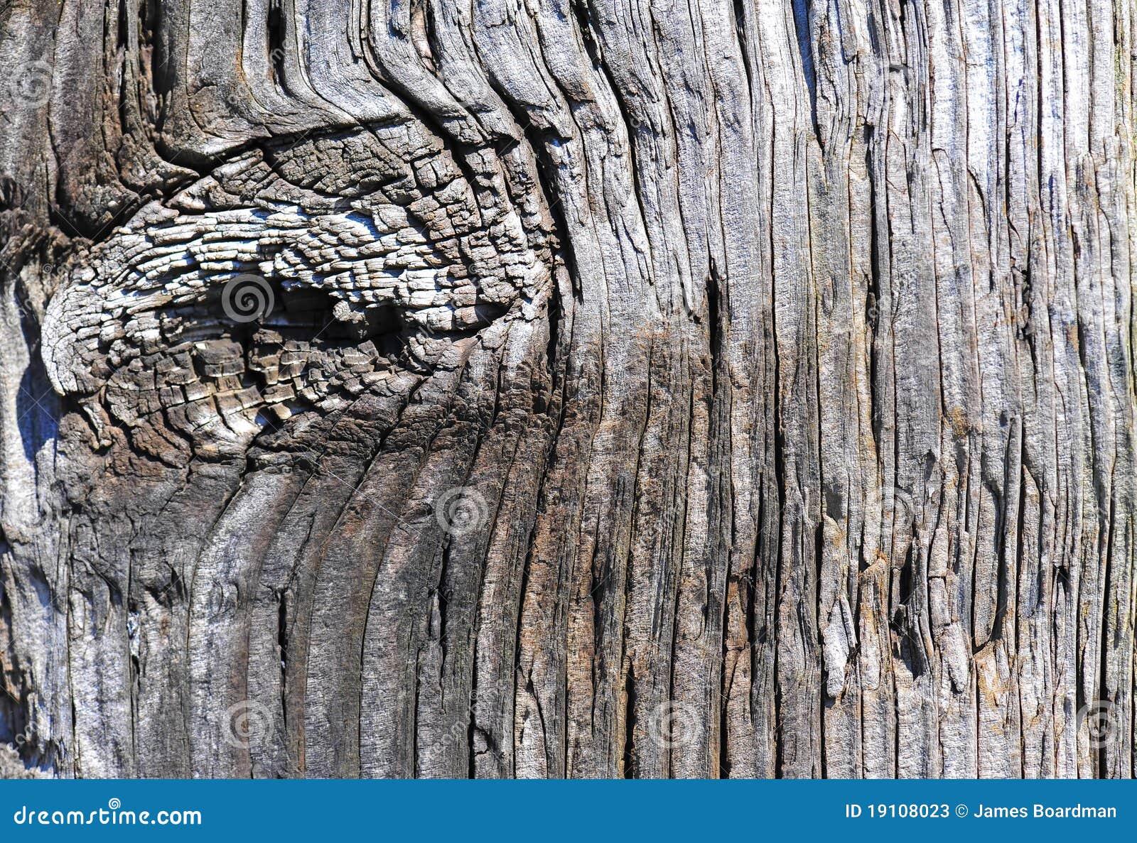 Noeud en bois superficiel par les agents de poteau de frontière de sécurité