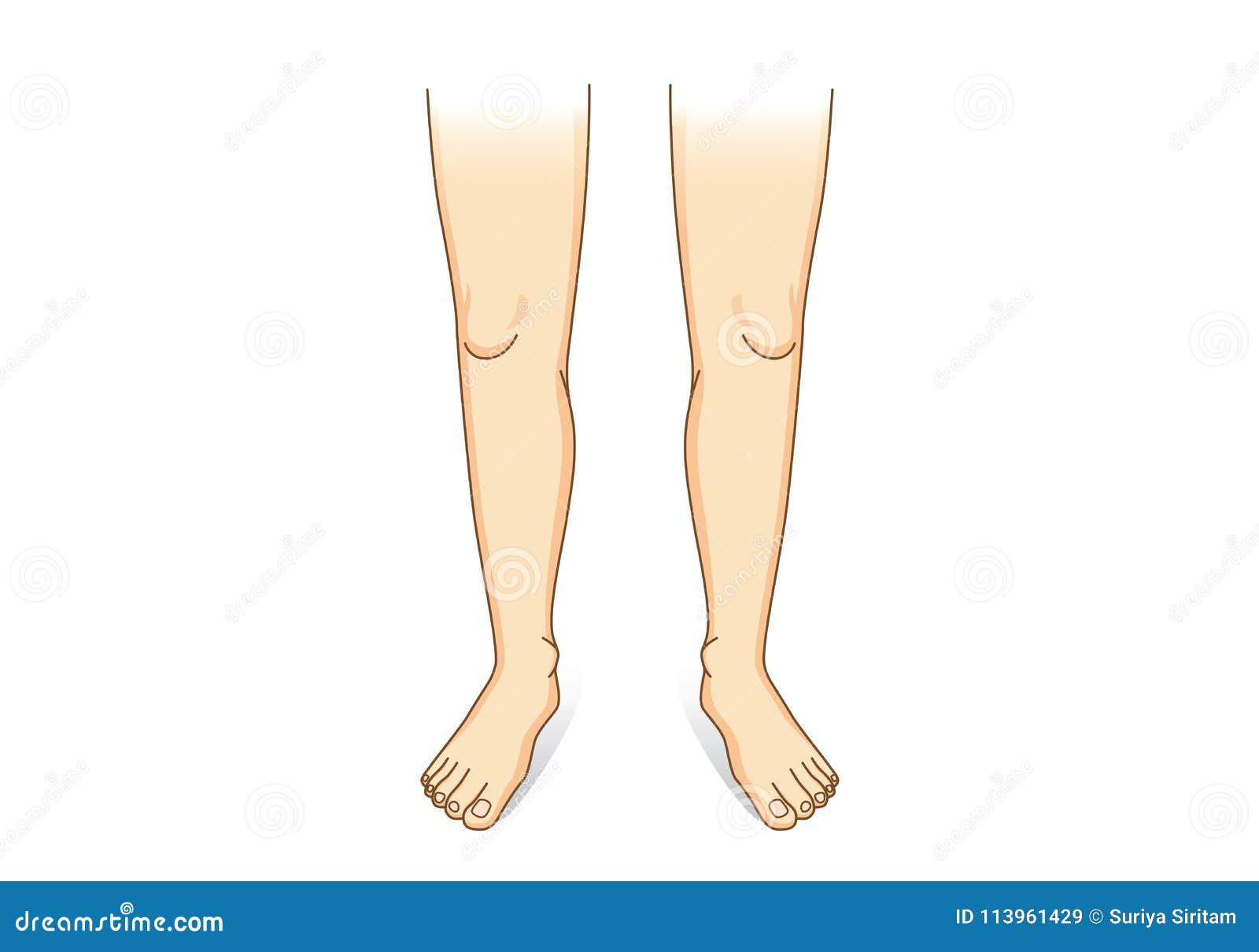 Noga wektor w frontowym widoku
