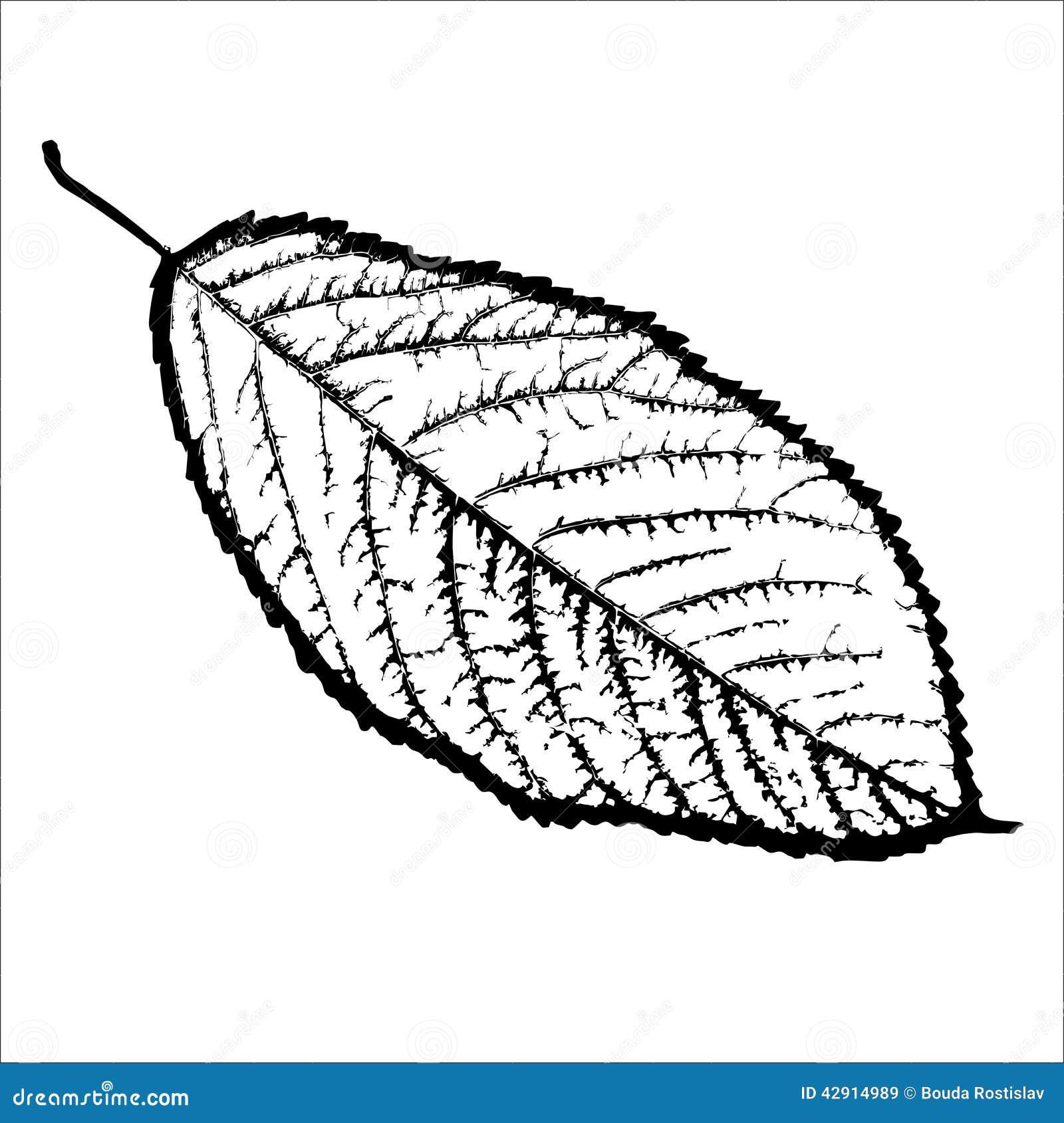 noir et blanc d 39 isolement arbre de feuille illustration stock image 42914989. Black Bedroom Furniture Sets. Home Design Ideas