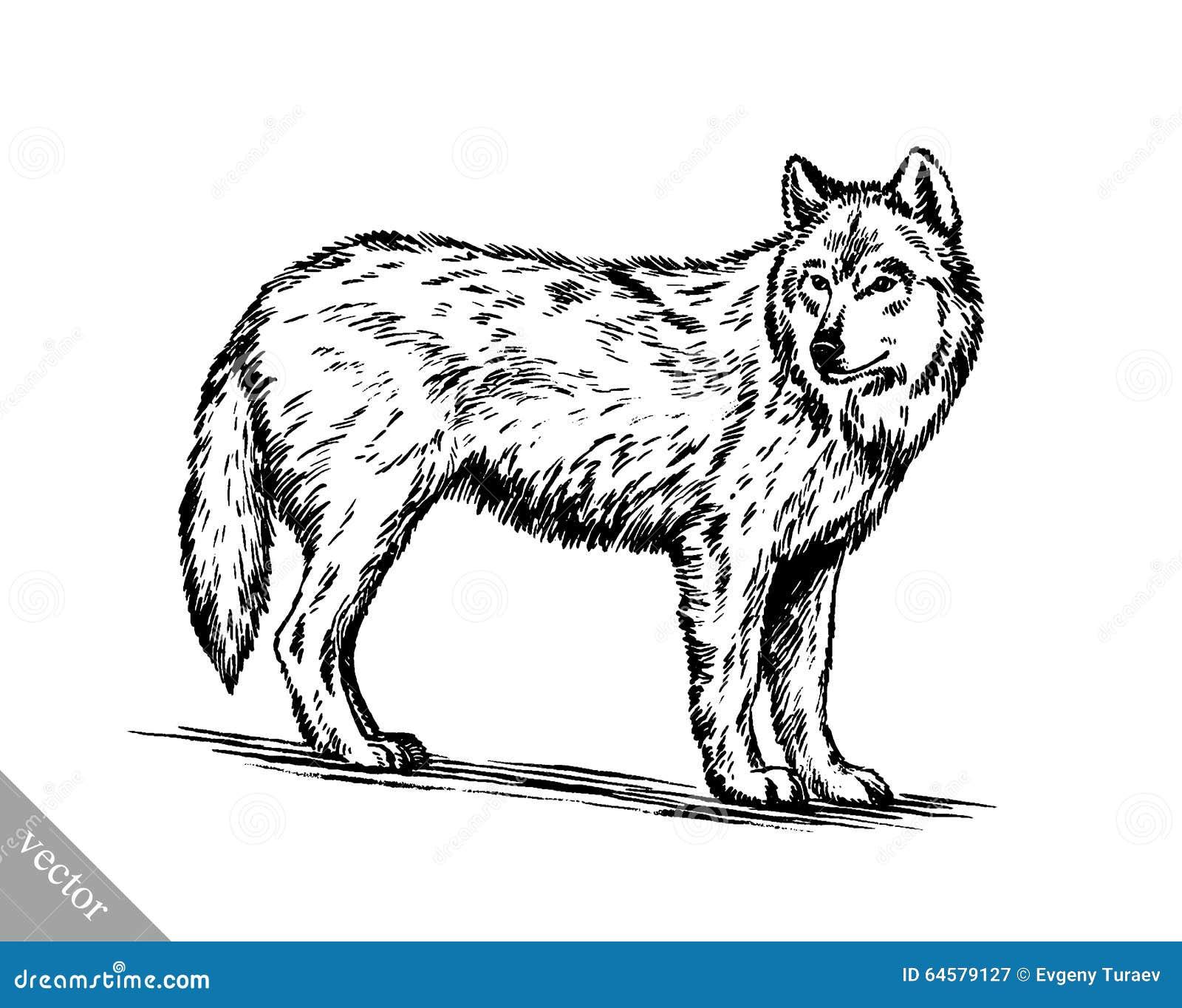 noir et blanc gravez le loup illustration de vecteur. Black Bedroom Furniture Sets. Home Design Ideas