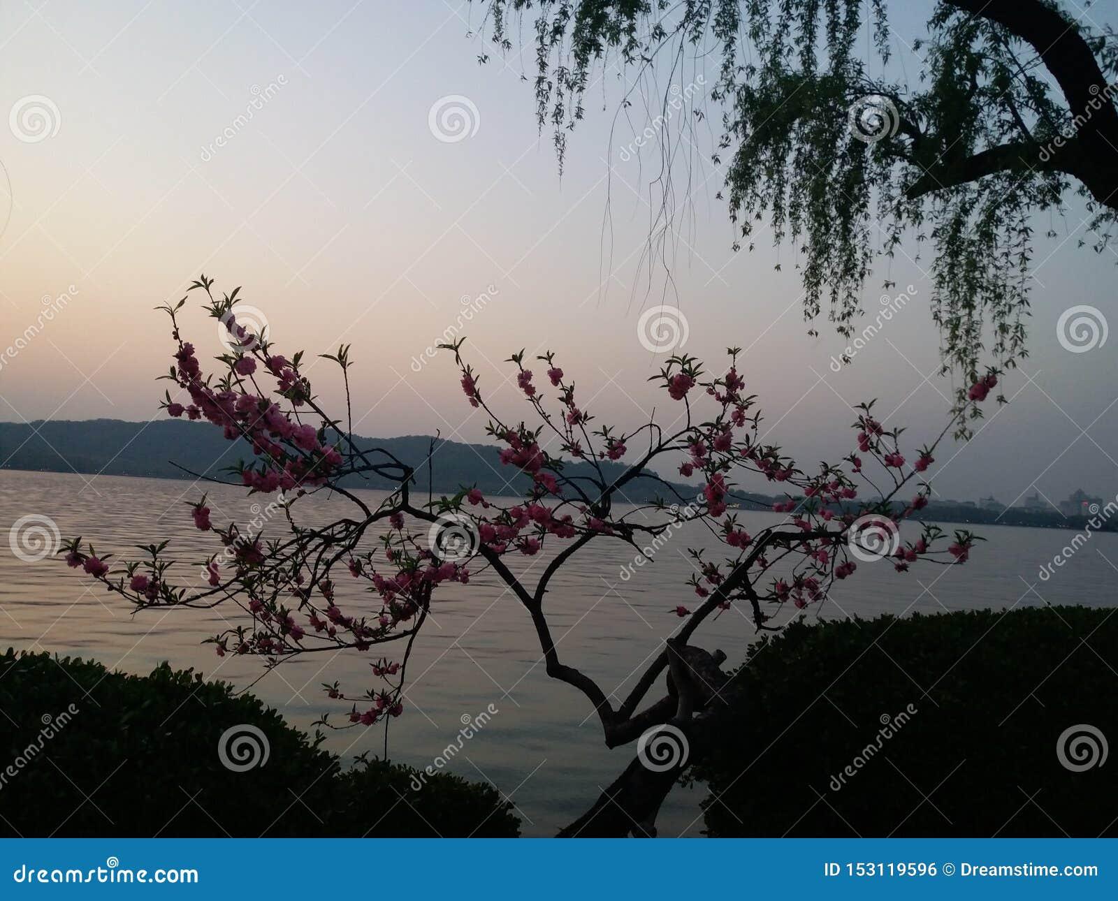 Noite bonita no lago ocidental, Hangzhou, China
