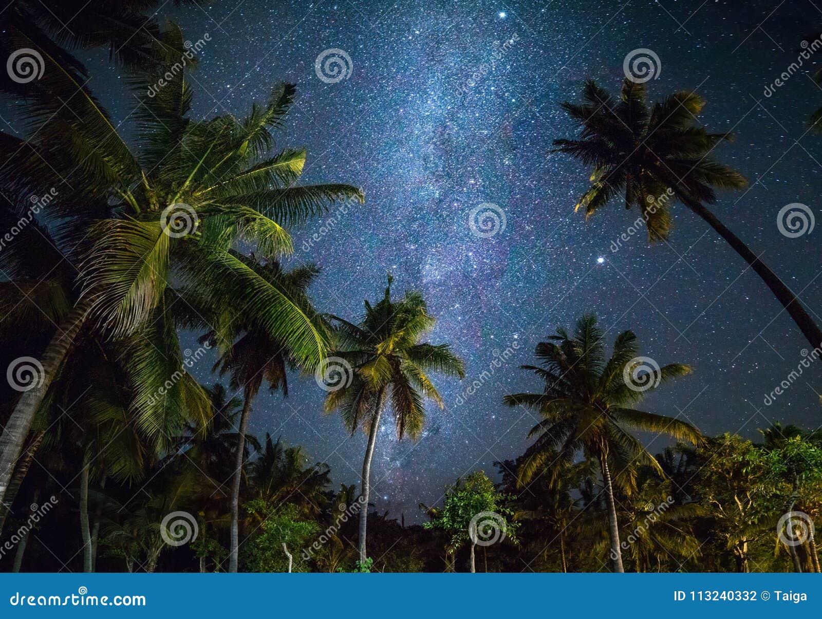 A noite disparou com palmeiras e Via Látea no fundo
