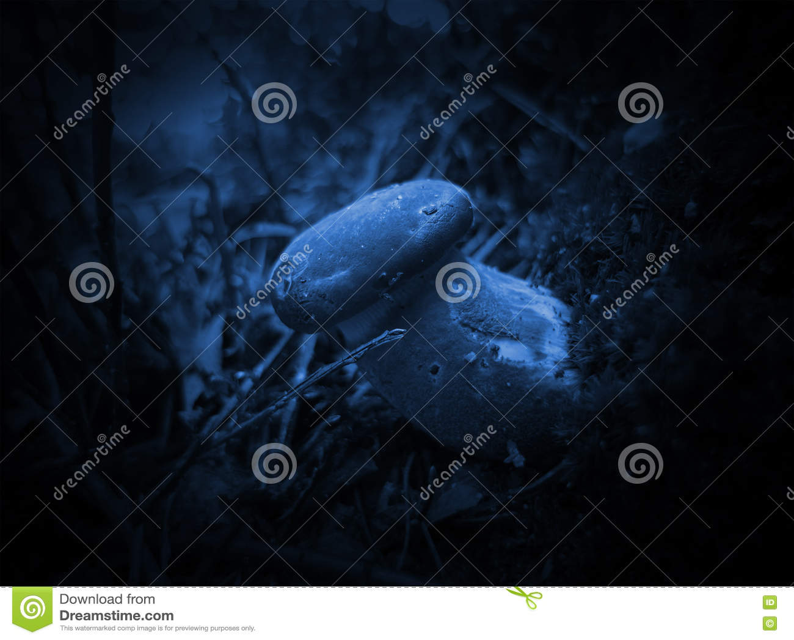 Noite e cogumelo místico