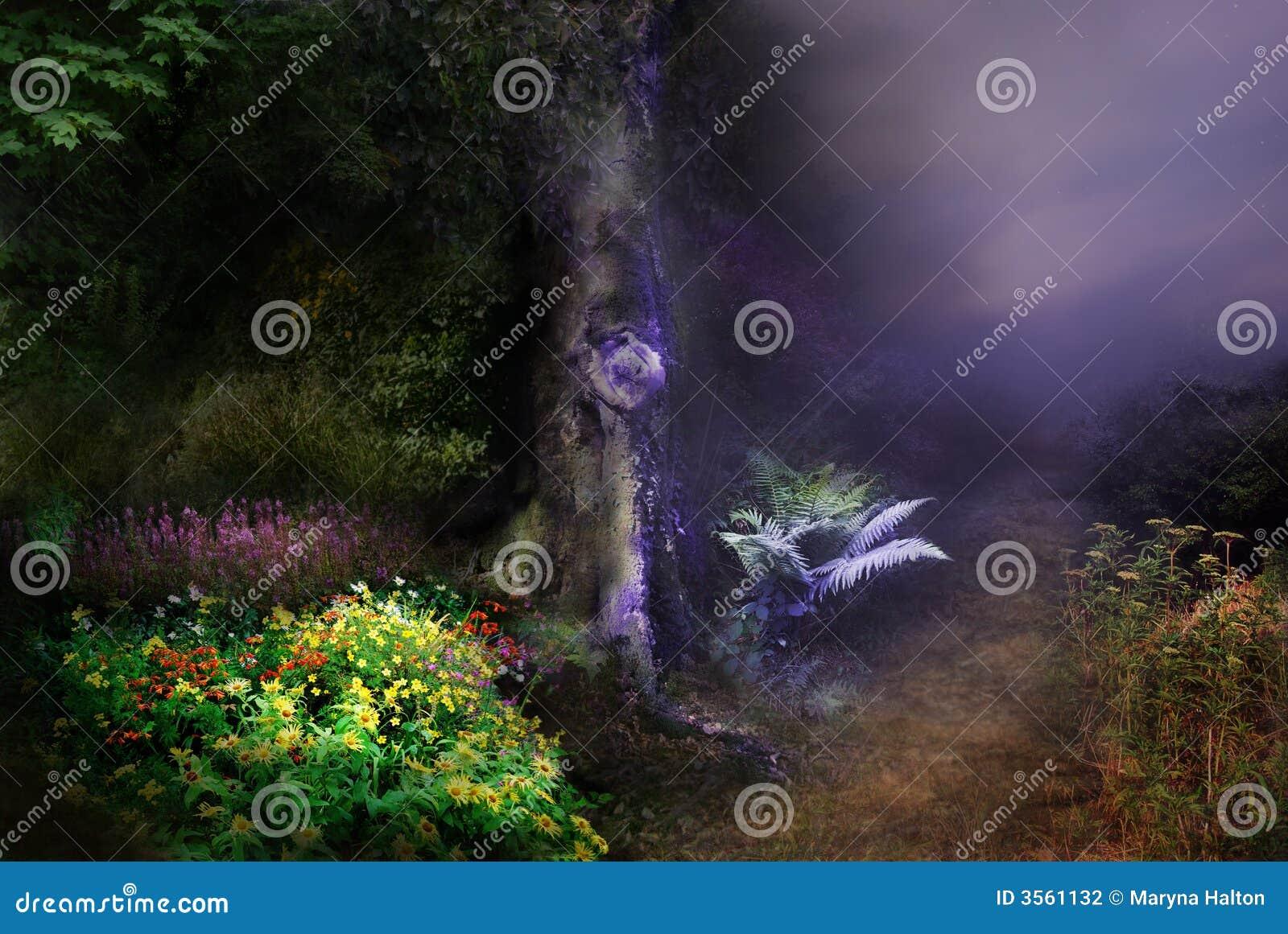Noite mágica da floresta