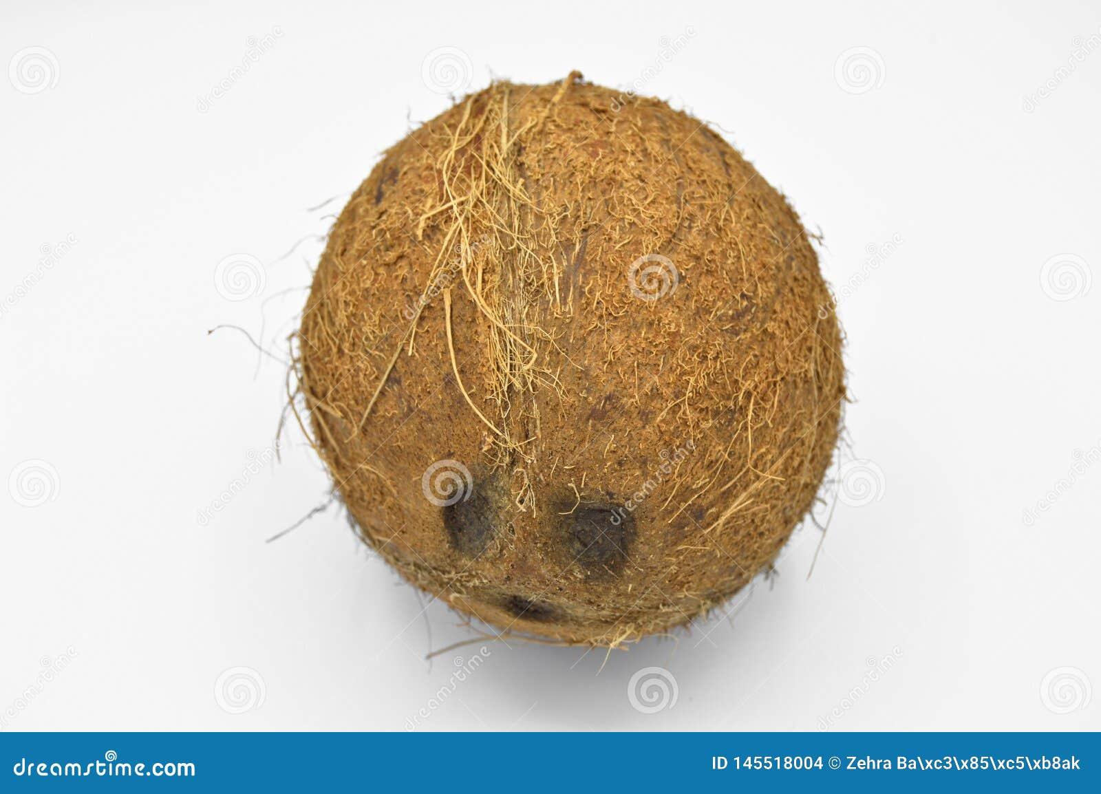 Noix de coco exotique de fruit avec la surface brune