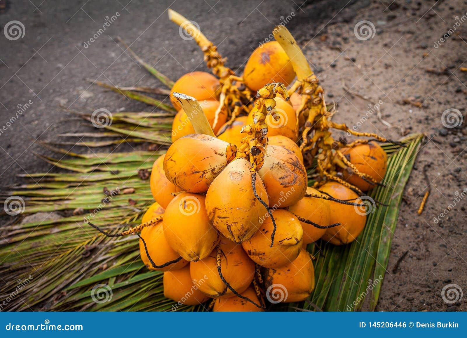 Noix de coco fra?ches sur les feuilles Fruits exotiques de Sri Lanka Groupe de noix de coco Produits favorables ? l environnement