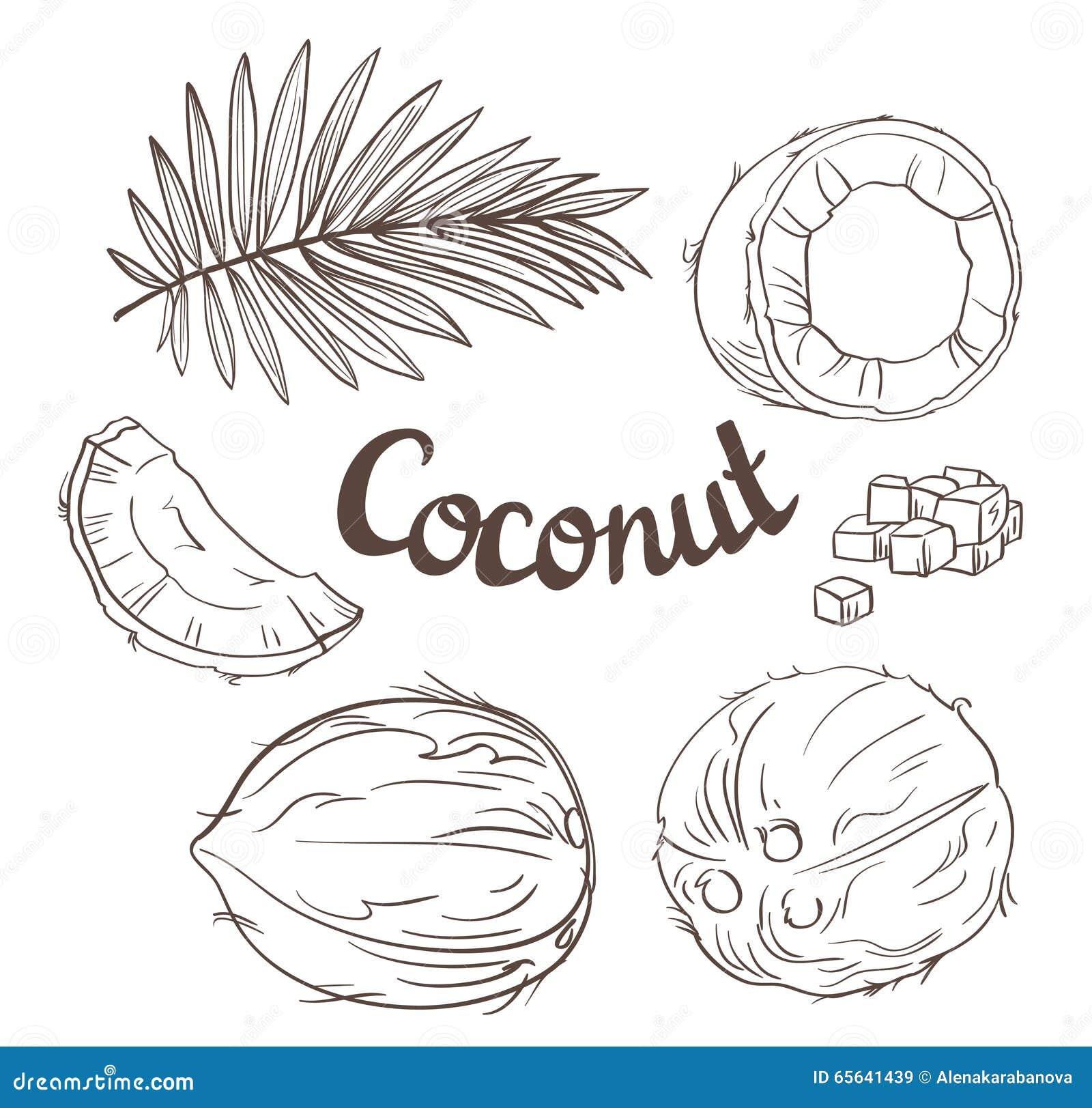Noix de coco réglée - l écrou entier, feuilles, un segment de Cocos et pulpe d un Coco