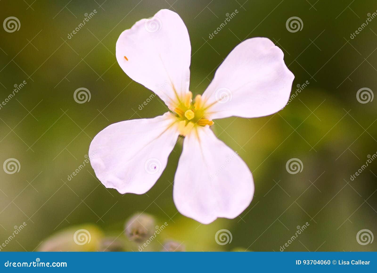 Nom D Inconnu De Fleur Blanche Photo Stock Image Du Regard Jardin