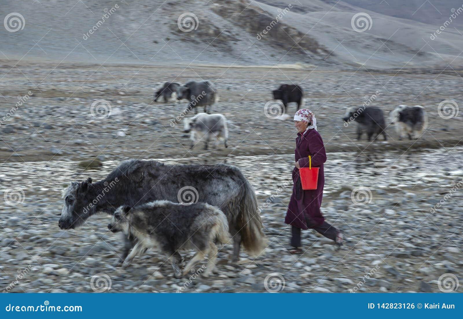 nomad-woman-walking-her-yaks-bayan-ulgii