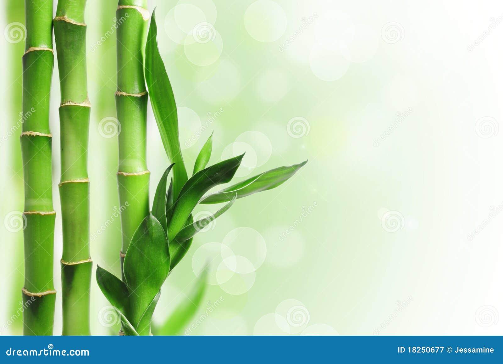我需要桌面背景竹子这个谁有,我找桌面背景竹子