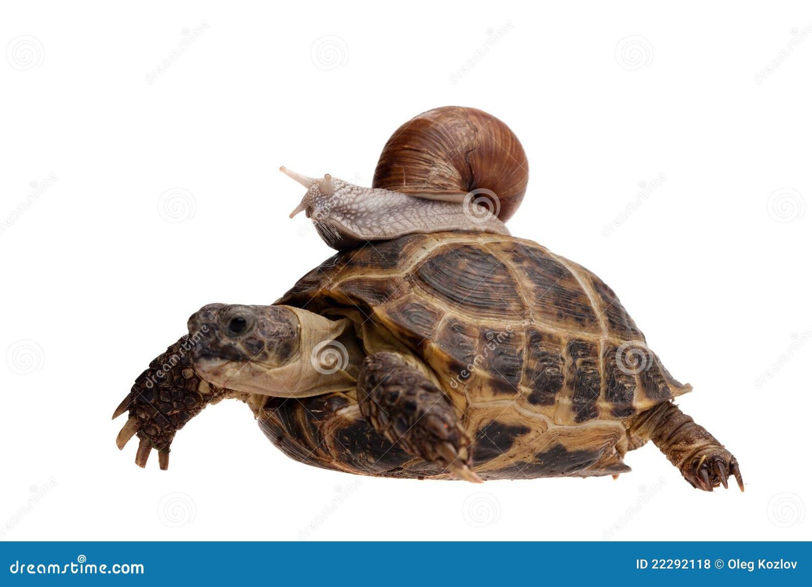 一只乌龟和蜗牛赛跑 它们方向至 乌龟一直领先蜗牛先跑到终点 为什蜗