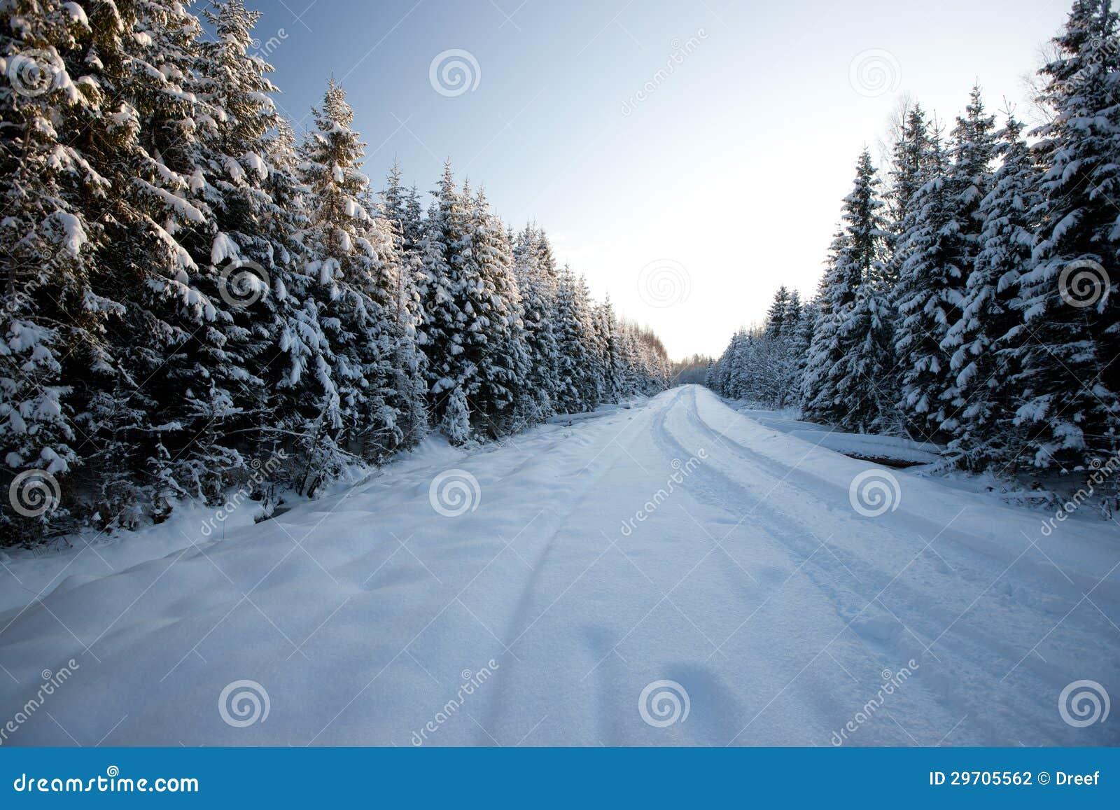在国家边与冷杉木,拉脱维亚,波儿地克国家,欧洲的冬天路.图片