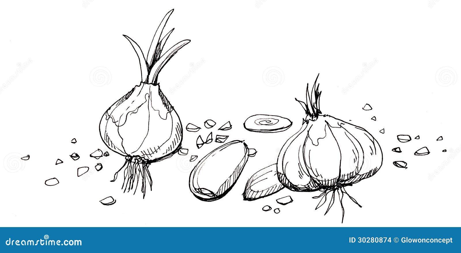 大蒜例证图画图片