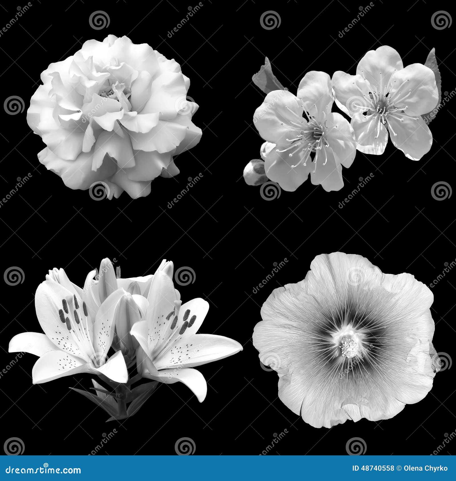 黑白花拼贴画在黑背景的