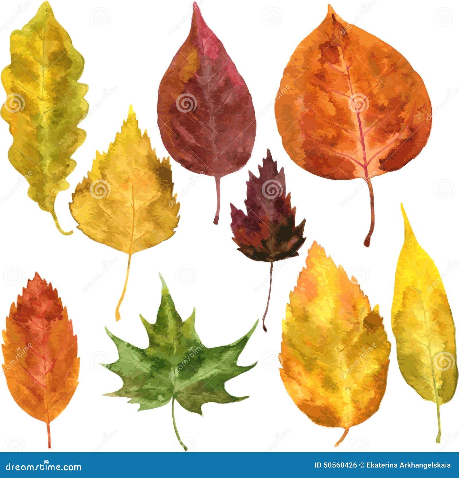 套在水彩的秋叶 向量例证 - 图片: 50560426图片