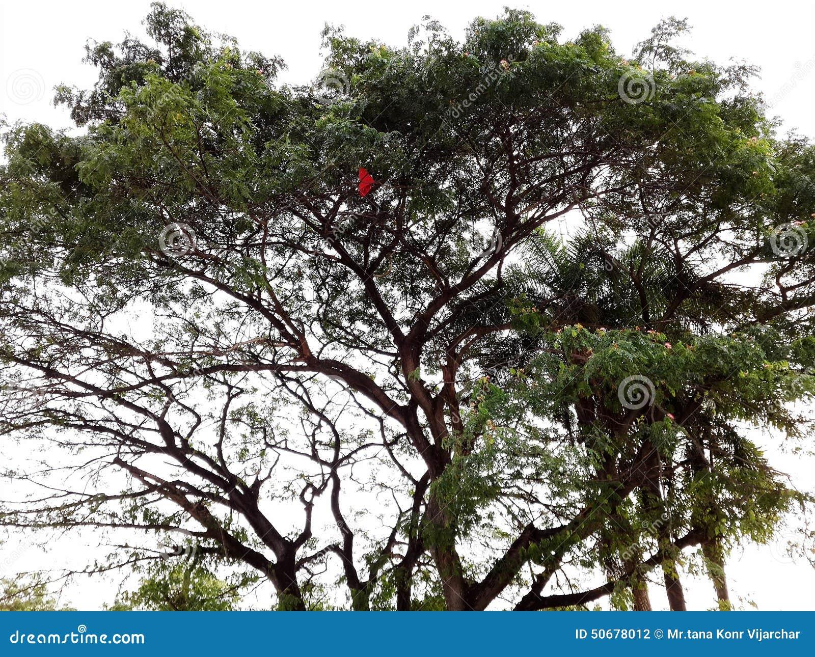 Download 树 库存照片. 图片 包括有 结构树, 羊羔, 红色, 绿色 - 50678012