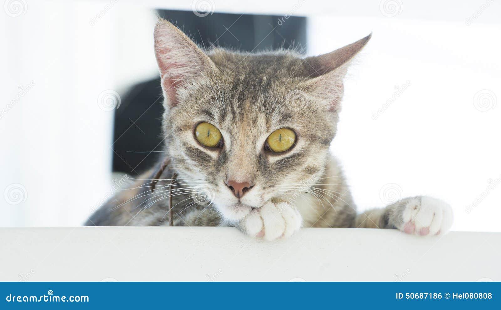 Download 猫 库存照片. 图片 包括有 重婚, 眼睛, 黄色, 全部赌注, 小猫, 好奇, 柔荑花, 非常, 逗人喜爱 - 50687186