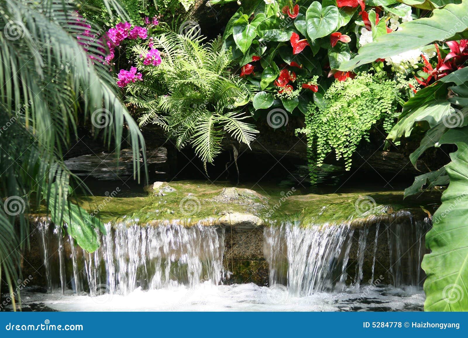 热带森林的雨图片