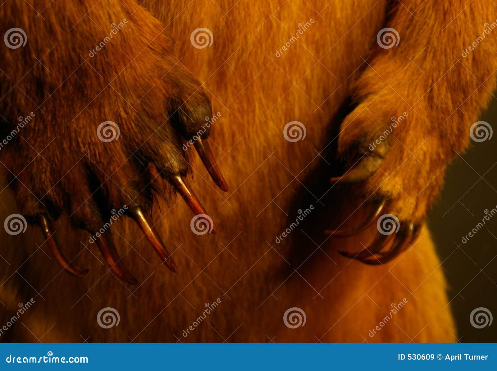 Download 爪 库存图片. 图片 包括有 敲打, 锋利, 通配, 哺乳动物, 敌意, 动物标本剥制术, 现有量, 猎人, 爪子 - 530609