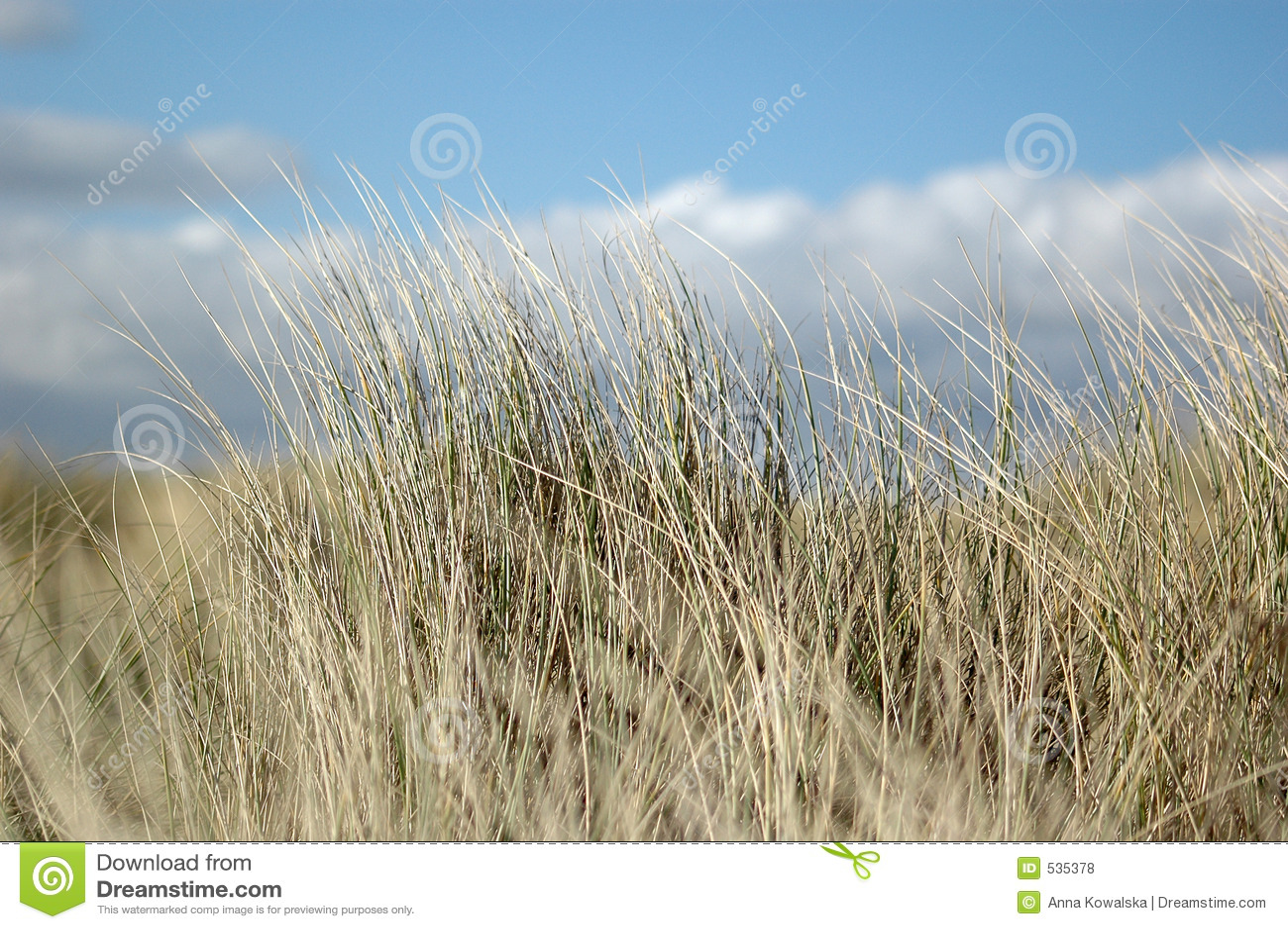 Download 草 库存照片. 图片 包括有 结构树, 本质, 背包徒步旅行者, 沙丘, 颜色, 沙子, 详细资料, 工厂, 影子 - 535378