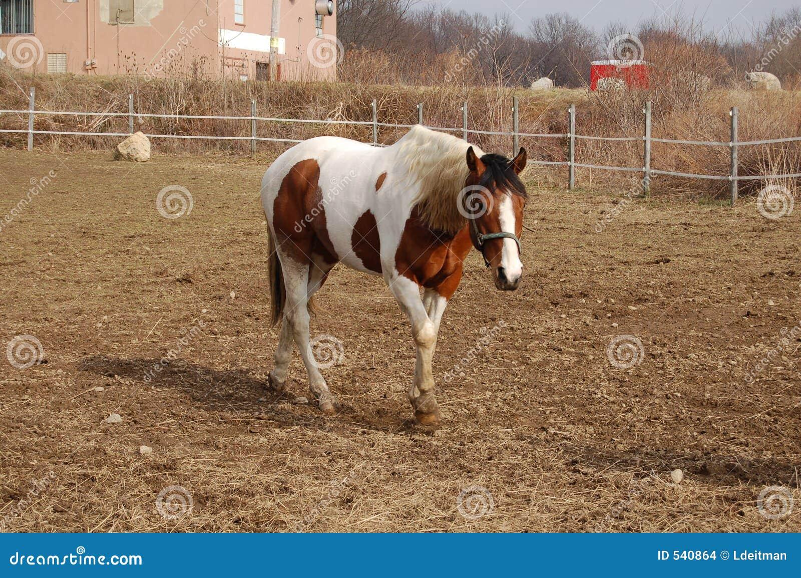 Download 走 库存照片. 图片 包括有 牧场地, 敌意, 农场, 交配动物者, 哺乳动物, 油漆, 亚马逊, 大使 - 540864