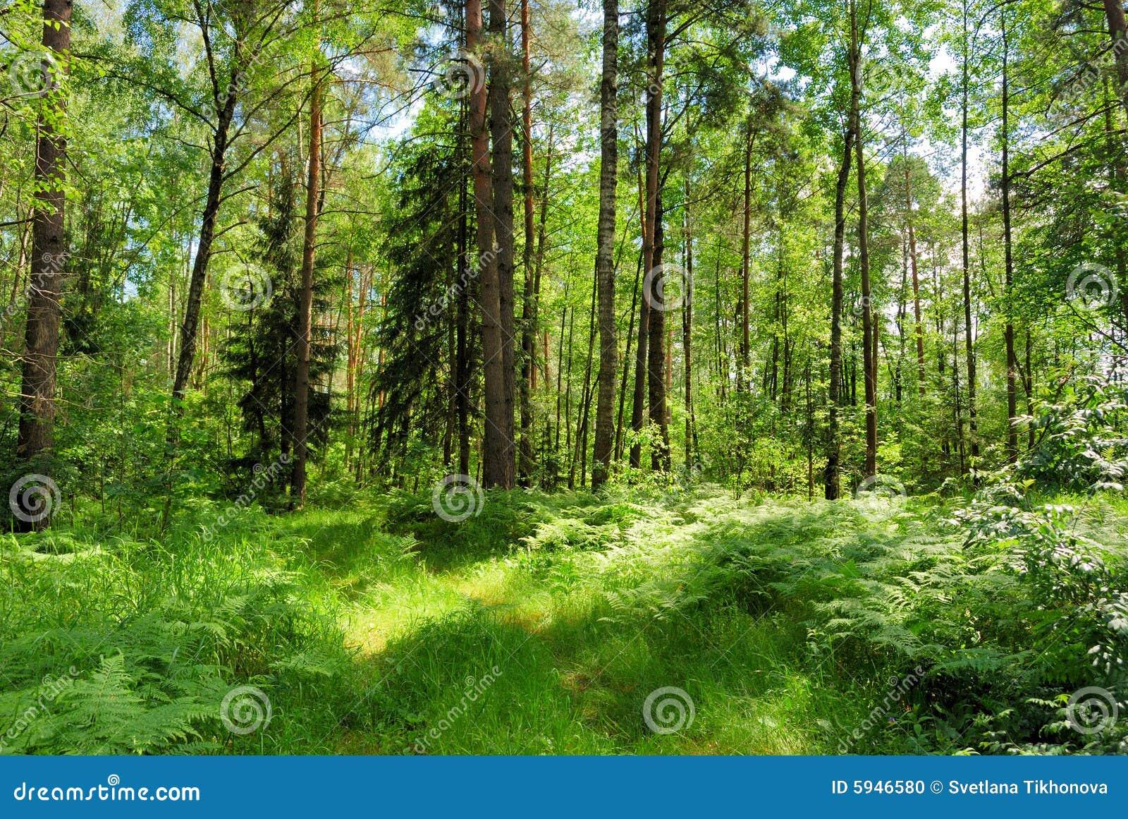 高清夏季森林图片大全展示