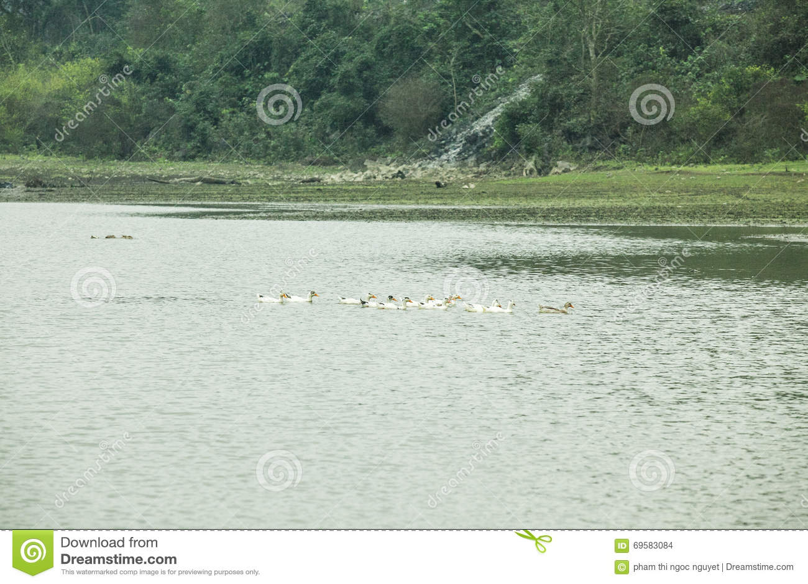 Noong kaczka na jeziorze i jezioro