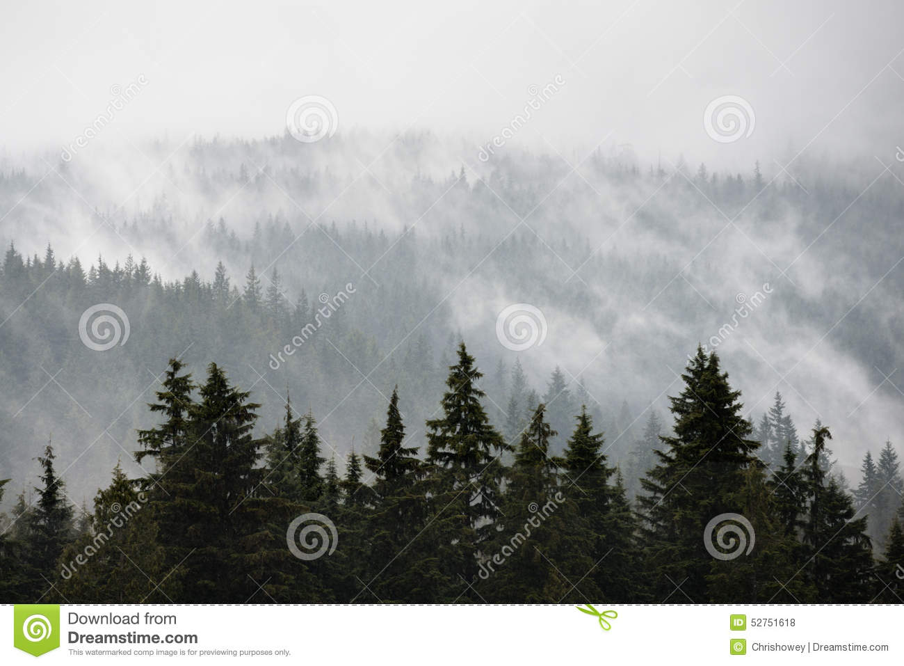 Noord-Vancouver Misty Trees