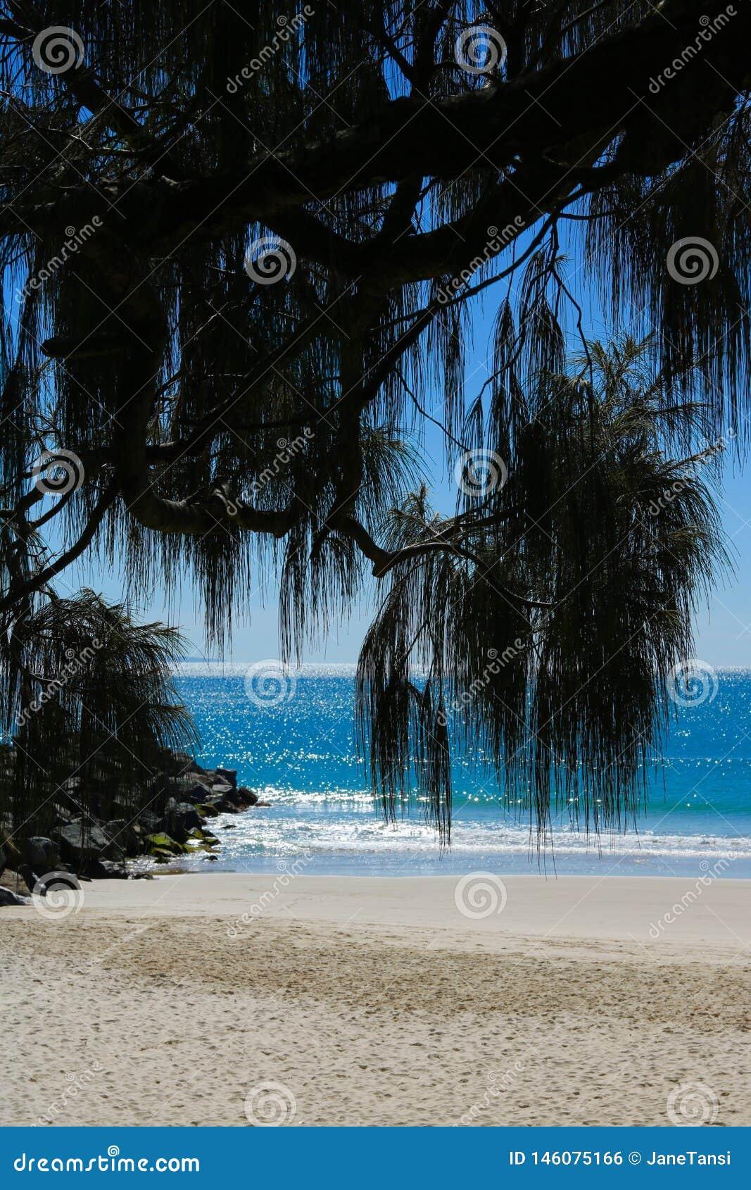 Noosastrand met palmvarenbladen in voorgrond - portretbeeld