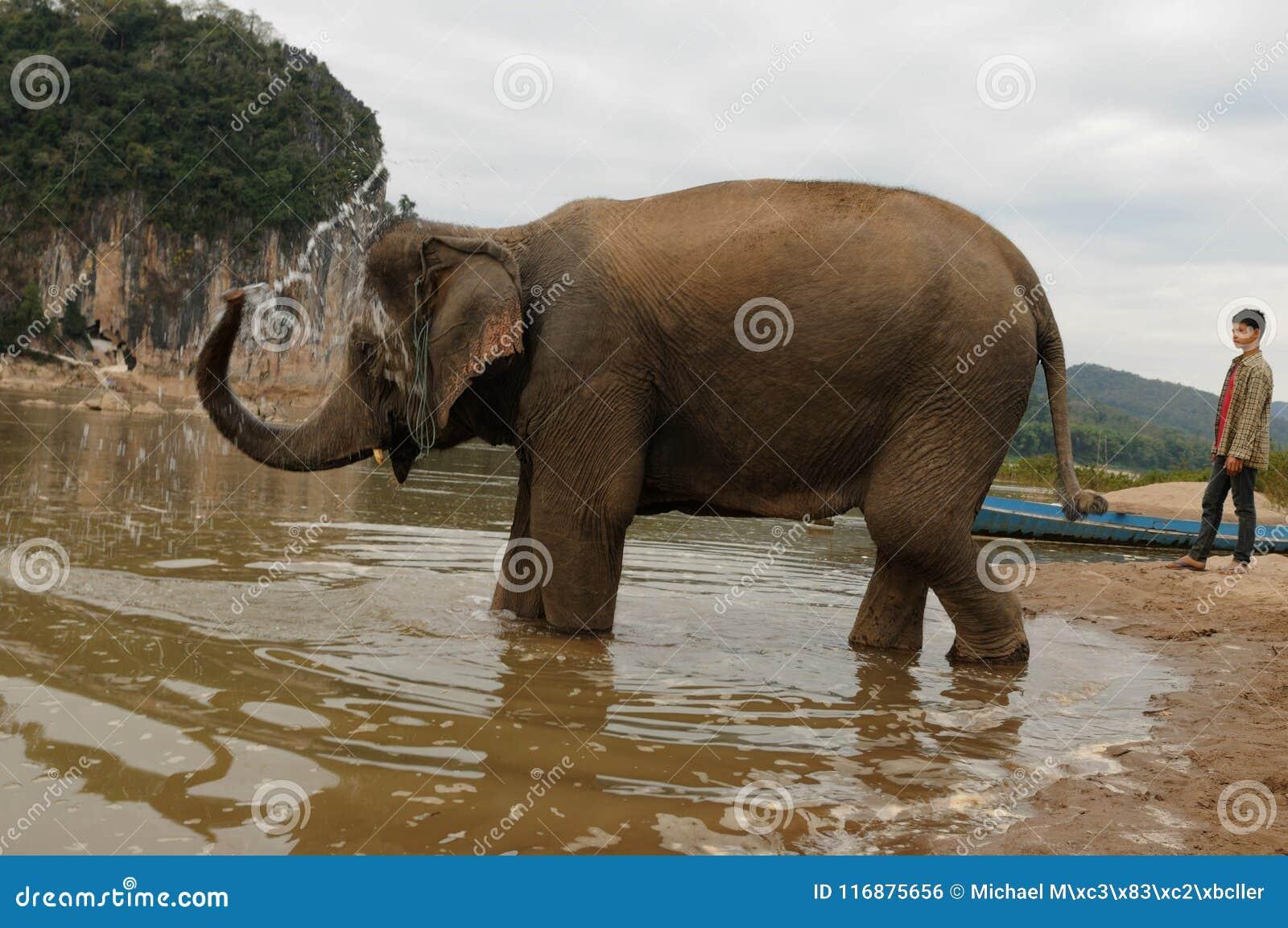 Nord-Laos: Elefanten tar ett bad på den Mekong River oppositen av