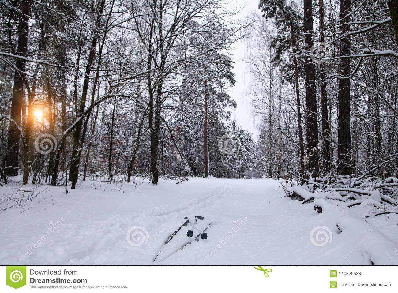 Nordic skiing concept background. man is skiing in winter forest at sunset