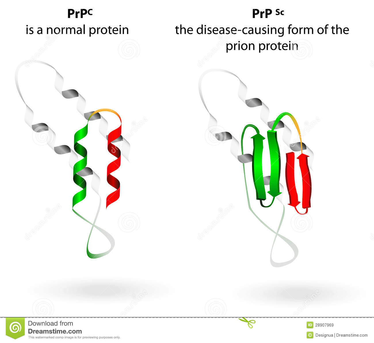 What Is a Prion?