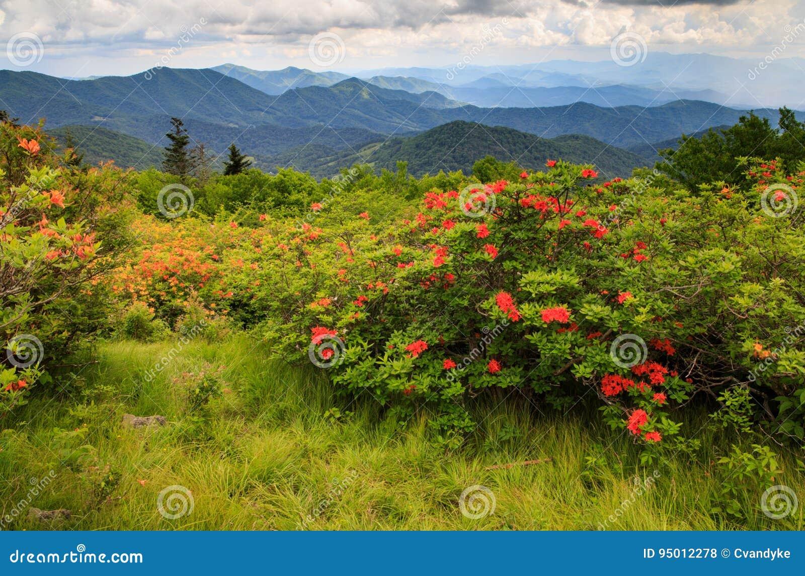 Norr Carolina Mountain Background
