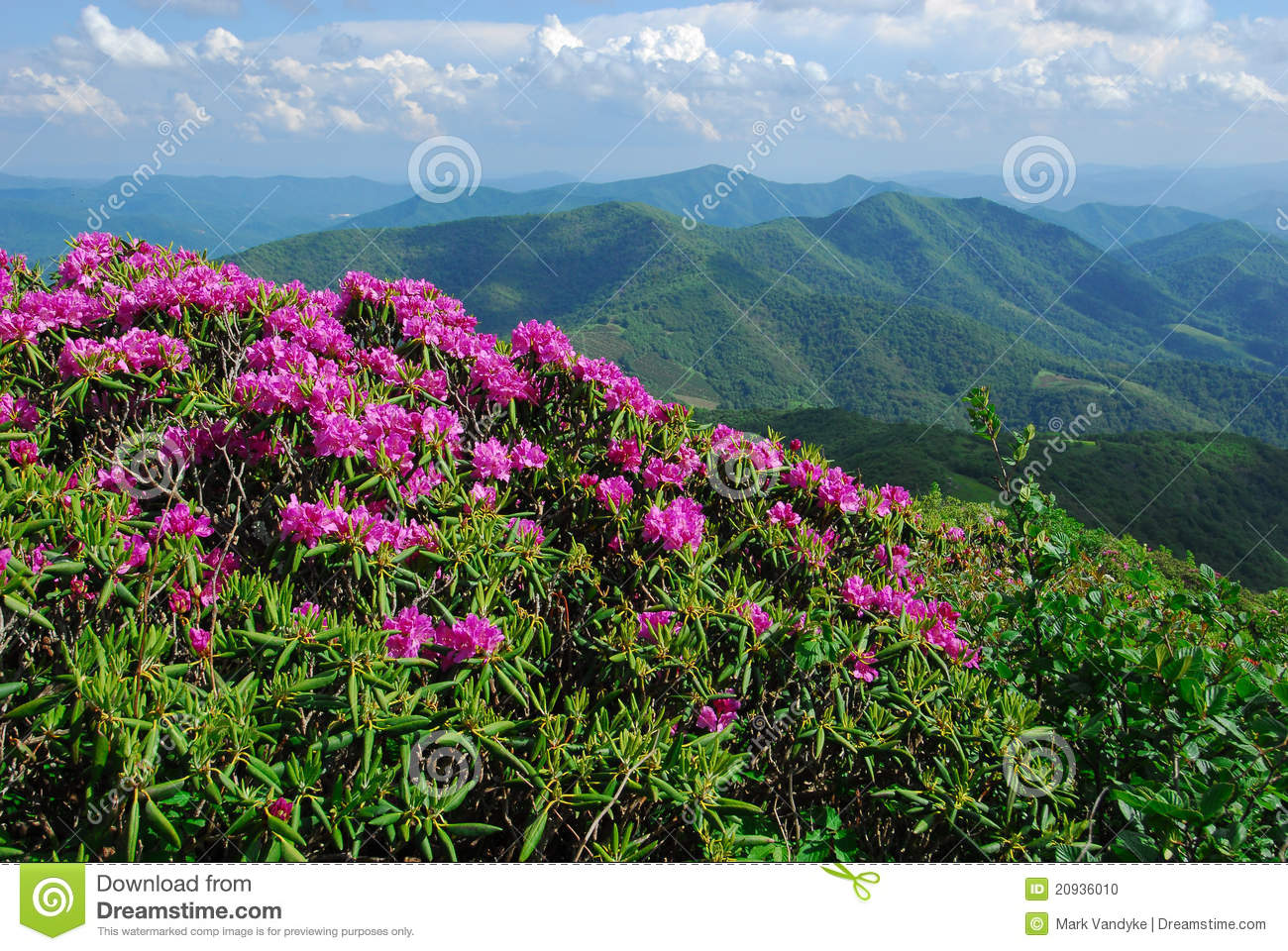 North Carolina Mountains and Wildflowers