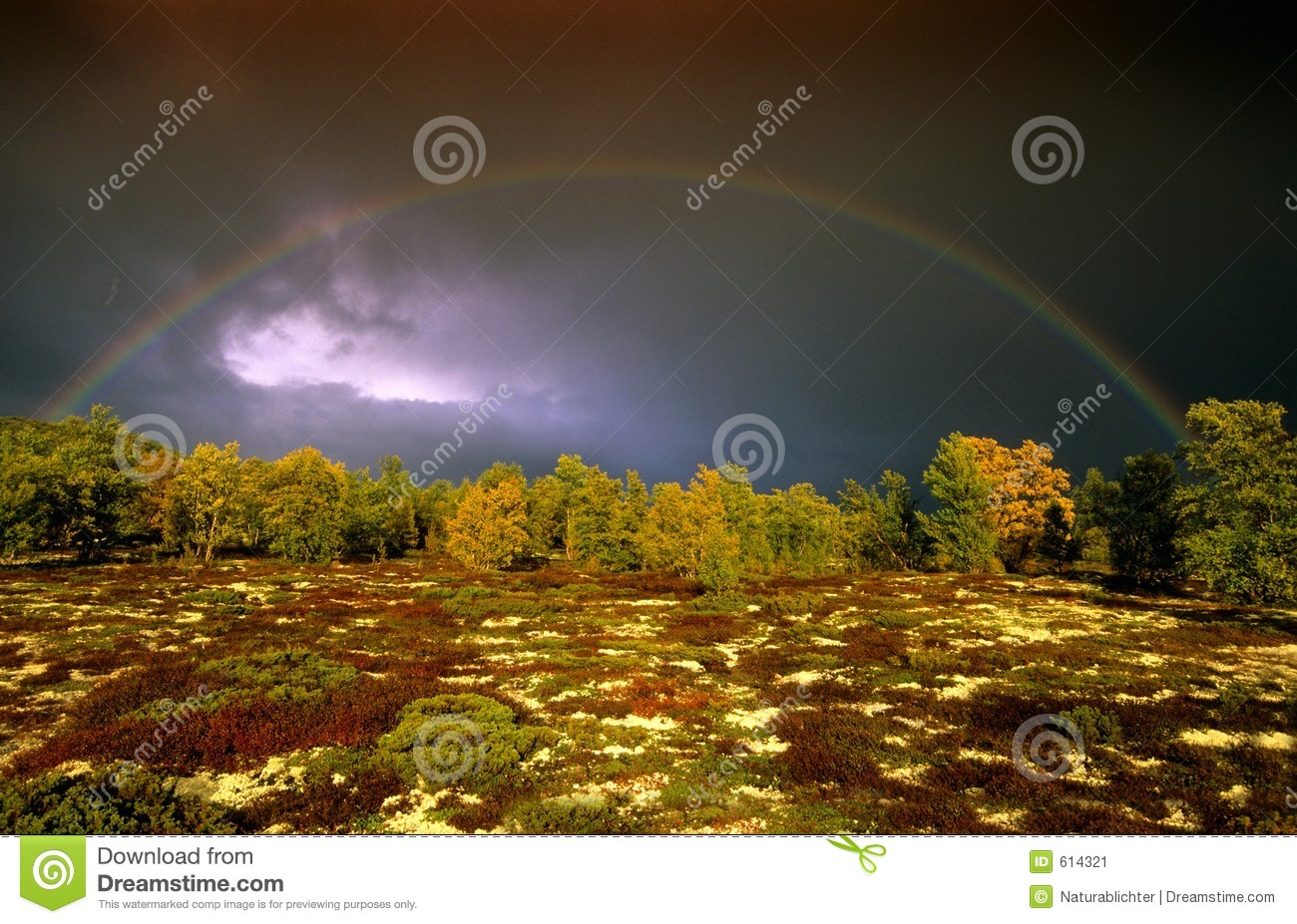 Download North land stock image. Image of catching, amazing, foliage - 614321