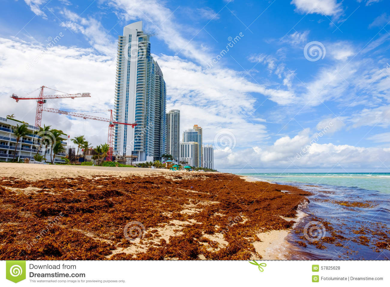 North Miami Beach stock photo  Image of sunny, blue, beauty