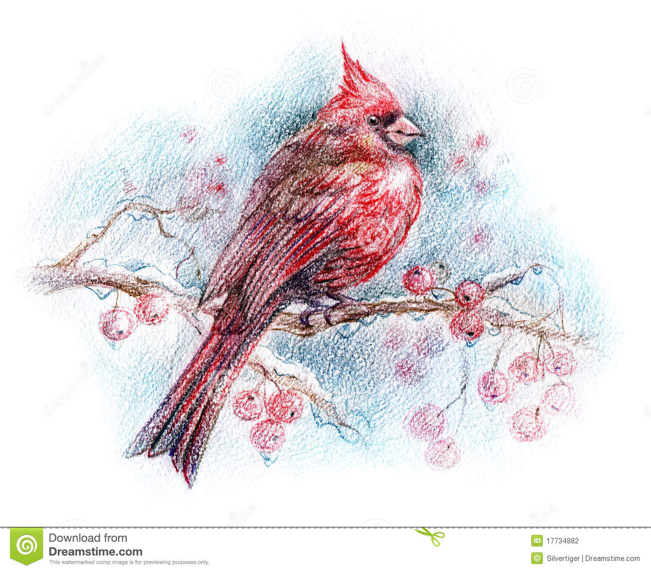 Northern Cardinal Bird Drawing Stock Photography - Image: 17734882