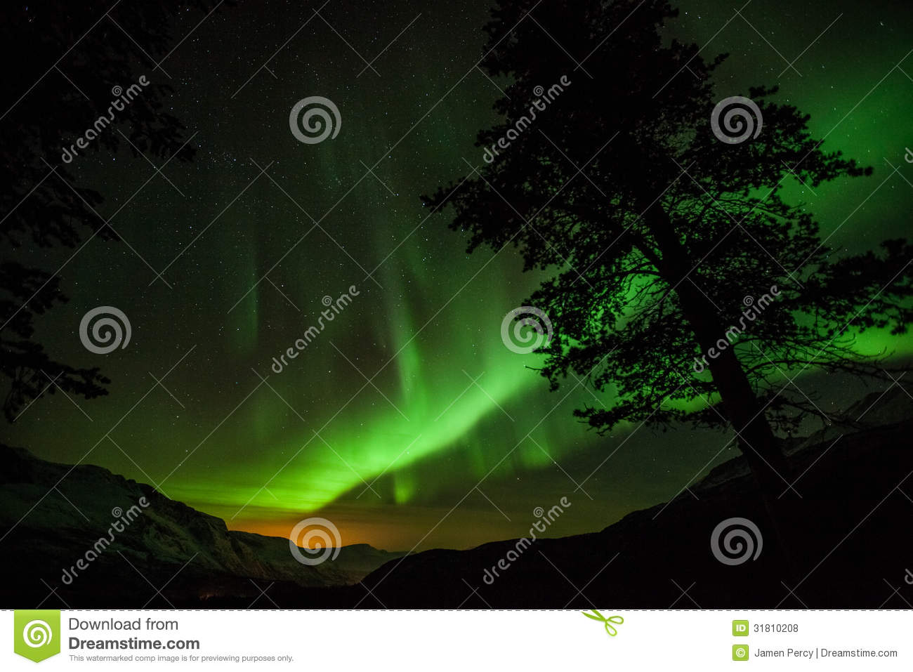 northern lights in sweden forest stock photo image of lights