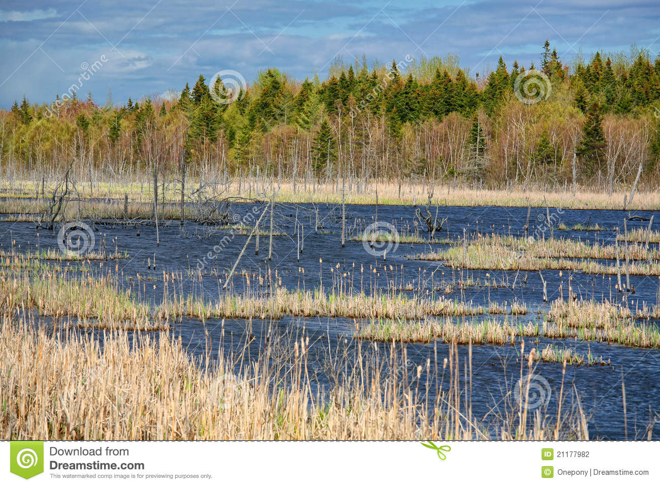 Northern Swamp