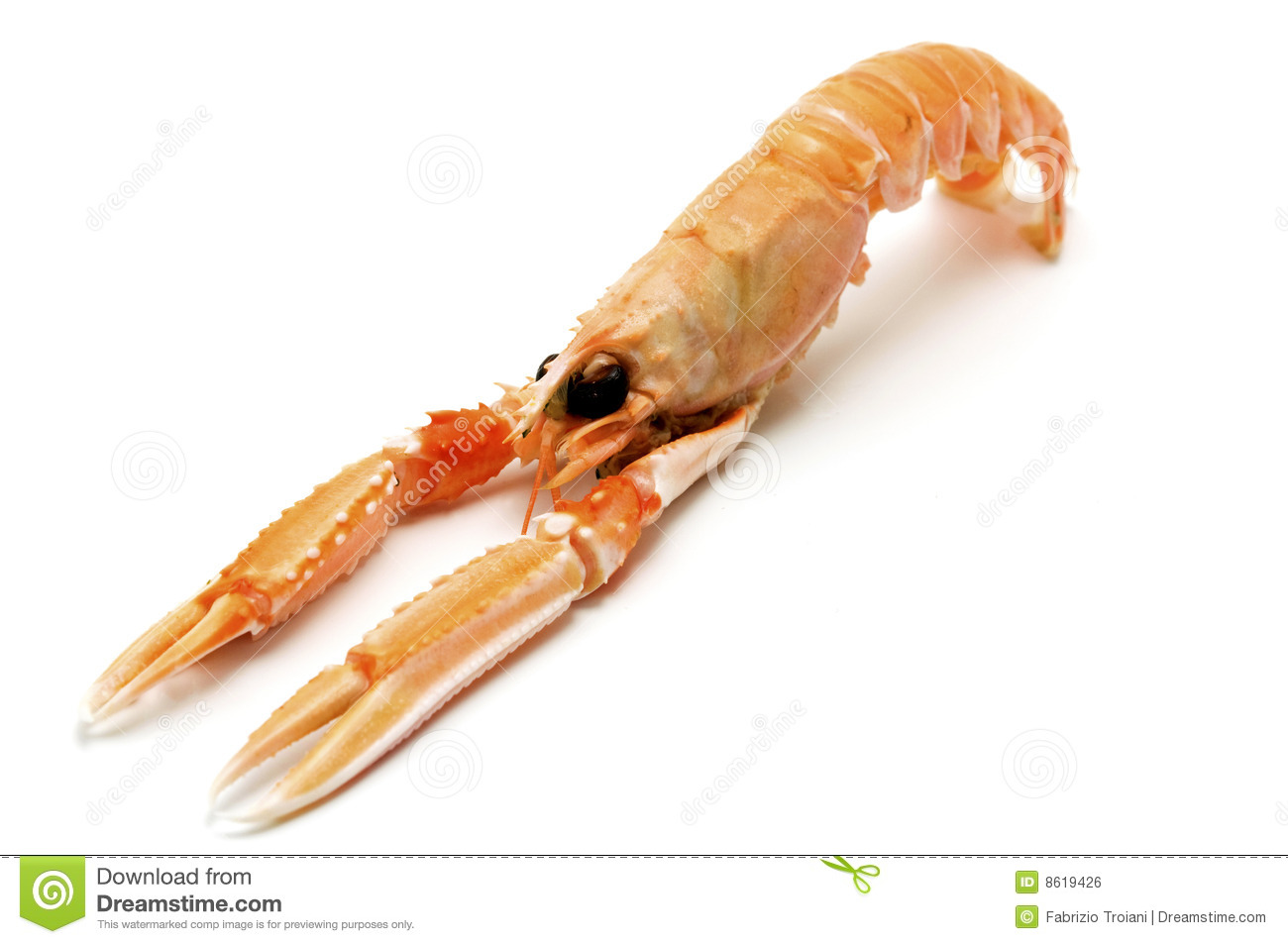 Norway Lobster Royalty Free Stock Image - Image: 8619426