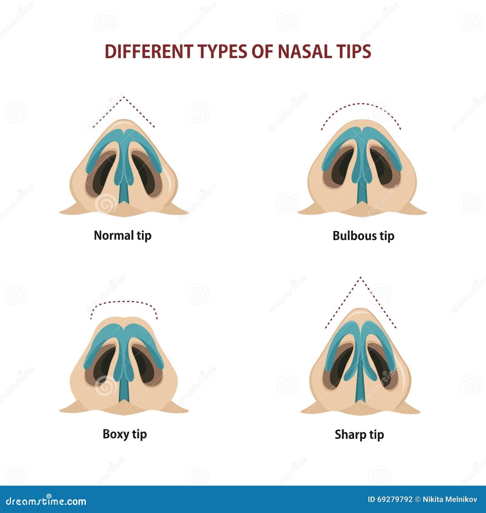 Fine Nose External Anatomy Illustration - Anatomy Ideas - yunoki.info