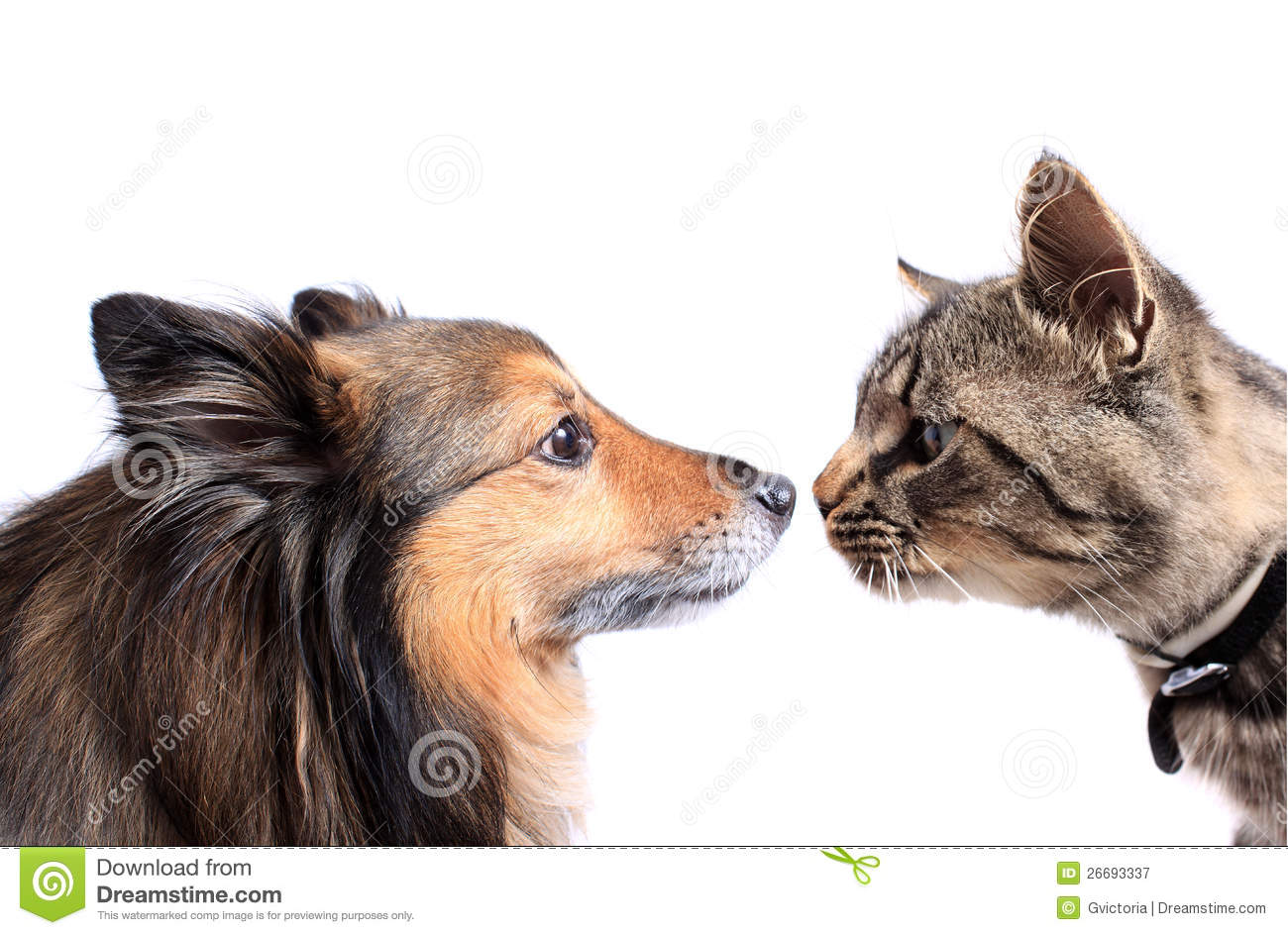 Can Cats And Dogs Talk To Each Other