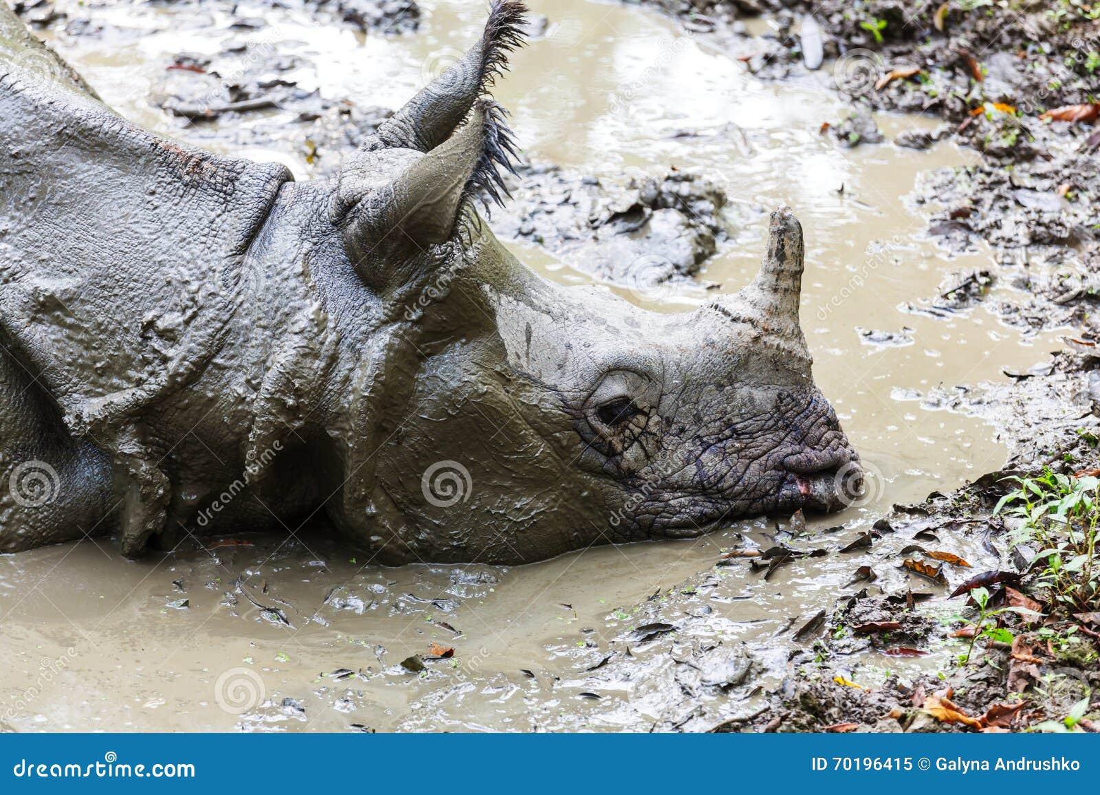 Noshörning i Nepal