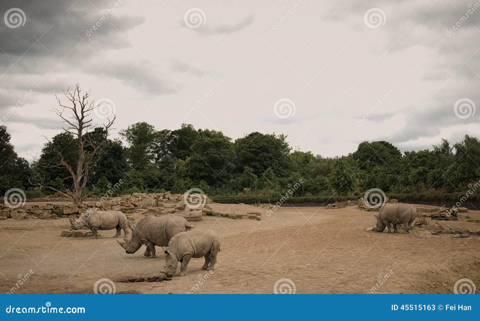 Nosorożec w góry Kenja parku narodowym