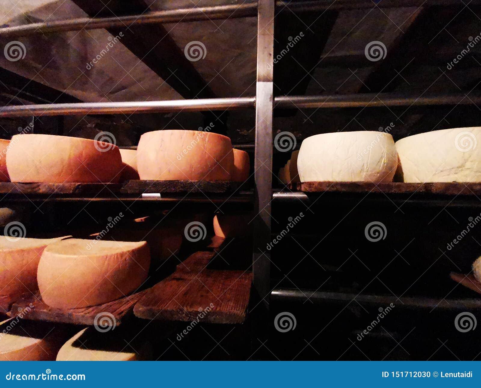 Nosowy ser na metalu odkłada w grocie
